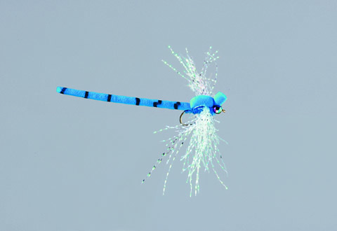 Rainy's Blue Damselfly - FM