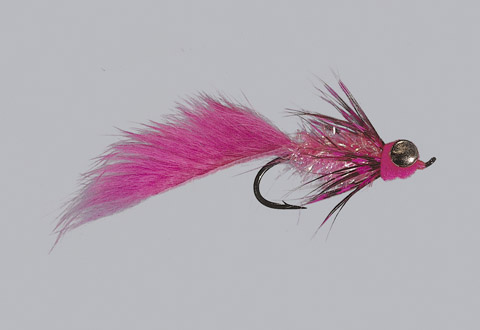 Pink Fat Cat Leech - WTD