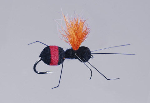 Rainy's Red-Butt Carpenter Ant - FM