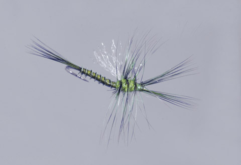 Galloup's BWO Biot Cripple
