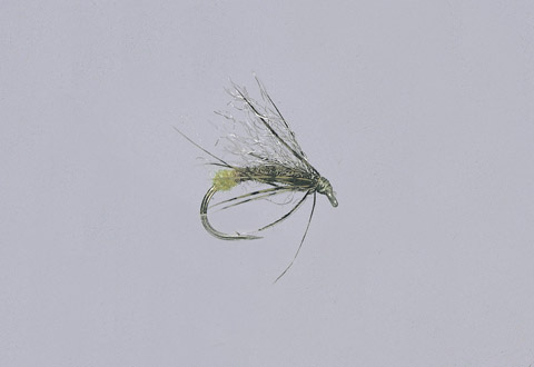 Galloup's Olive Downed Caddis