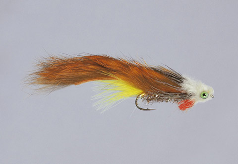 Galloup's Rusty Brown Monkey