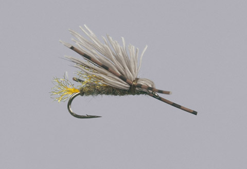 Galloup's Olive Butch Caddis