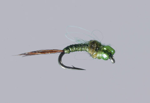 Hindmarsh's Loop-Wing Mayfly Emerger - Olive