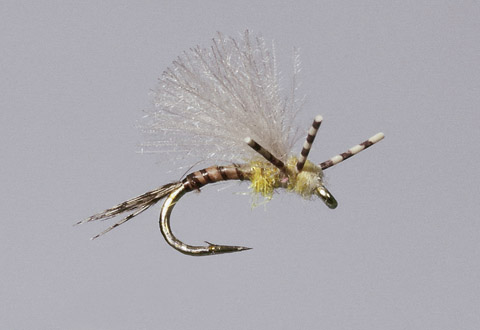 Haslam's PMD X Emerger