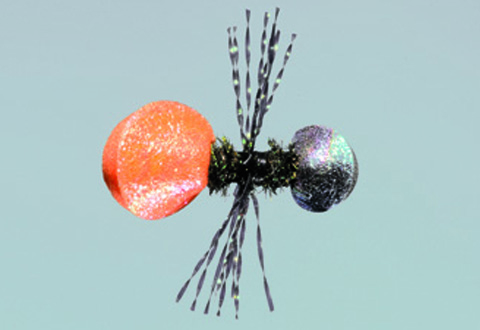Steeves' Cow Killer Ant - Orange