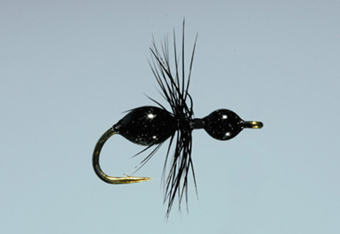 Steeves' Transpara-Ant - Black