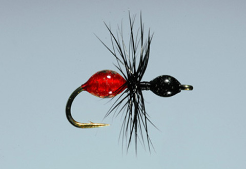Steeves' Transpara-Ant - Blk/Red