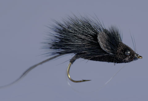 Whitlock's MouseRat Black - WG